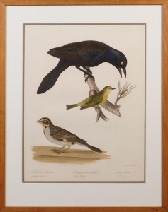 Alexander Lawson after Titian Ramsay Peale: Female Crow Blackbird, Orange-Crowned Warbler, Lark Finch