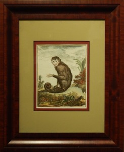 Monkey, Hand Colored Engraving